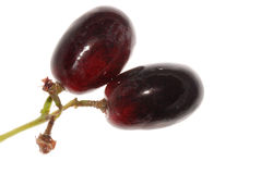 Grape isolated Royalty Free Stock Images