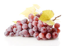 Grape isolated Stock Image