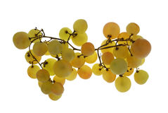 Grape isolated on white royalty free stock photography