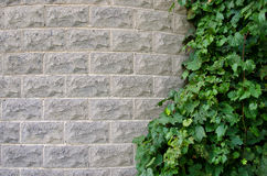 Grape ivy on silo Royalty Free Stock Photography