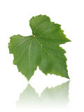 Grape leaf a. Grape leaf isolated on white background Royalty Free Stock Images