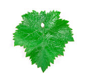Grape leaf. Royalty Free Stock Photo