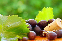 Grape, leaf, cork - background for red wine Royalty Free Stock Photo