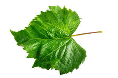 Grape Leaf, isolated with clipping path Royalty Free Stock Images
