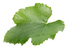 Grape leaf isolated on the white background Royalty Free Stock Photo