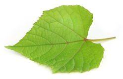 Grape leaf Stock Photography