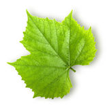 Grape leaf. Leaf from the vine isolated on a white background with clipping path Royalty Free Stock Photo