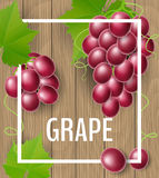 Grape with leaf on wood background for autumn. Red grape fruit and berry with leaf and tendril, on wood background with white frame. Realistic vector Royalty Free Stock Photo