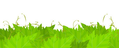 Grape leafs background. Royalty Free Stock Photos