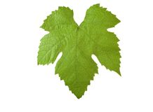 Grape-leave with clipping path. Perfect grape-leaf with clipping path isolated on white background.Please take a look at my other images of grape-leaves Royalty Free Stock Images