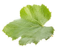 Grape leave isolated on the white background Royalty Free Stock Image