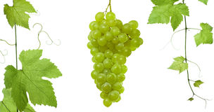 Grape-leaves ansd grapes royalty free stock images