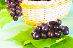 Grape and leaves in basket on wooden table Stock Photography
