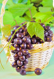 Grape and leaves in basket on wooden table Royalty Free Stock Image