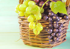 Grape and leaves in basket on wooden table Royalty Free Stock Photos