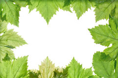 Grape leaves border Royalty Free Stock Image