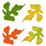 Grape leaves. Decorative autumn vine leaves painted in different Stock Photo