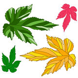 Grape leaves. Decorative autumn vine leaves painted in different. Decorative autumn vine leaves painted in different  colors (red, yellow, green, orange Royalty Free Stock Images