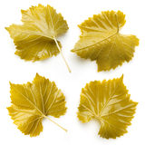Grape leaves for dolma. Collection on white background Royalty Free Stock Image