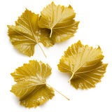 Grape leaves for dolma. Collection on white background Stock Photos
