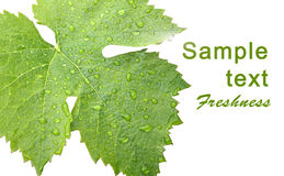 Grape leaves with drops - card Stock Photography