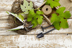Grape leaves  and garden tools on wooden table Royalty Free Stock Photo