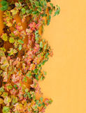 Grape leaves on house wall Stock Images