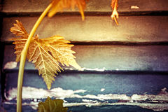 Grape leaves over wooden vintage background Stock Photos