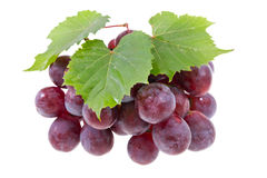Grape with leaves. Red grape with leaves isolated on white Stock Photography