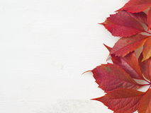 Grape leaves on the right of the white wooden background. Red autumn leaves upon white wooden background. Copy space for your text Stock Photos