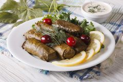 Grape leaves stuffed with meat and rice on a plate. horizontal Royalty Free Stock Photography