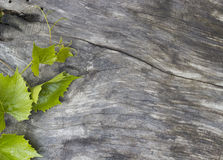 Grape leaves on a  table Royalty Free Stock Images