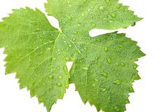 Grape leaves on a white 2 Stock Images