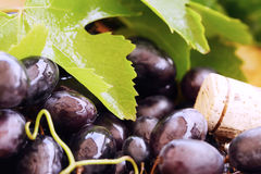 Grape with leaves and wine cork Stock Image