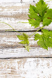 Grape leaves on wooden table Stock Images