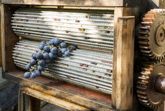 Grape in manual crusher Royalty Free Stock Images