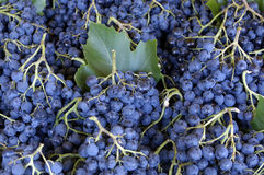 Grape at the market Stock Photography