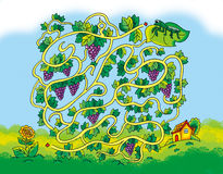 Grape maze Stock Image