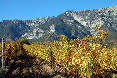 Grape and mountains Royalty Free Stock Photo