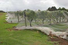 Grape Net 3. Grape vines under protective netting royalty free stock photos