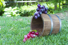 Grape and oak barrels Royalty Free Stock Images