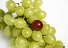 Grape oddity Royalty Free Stock Photos