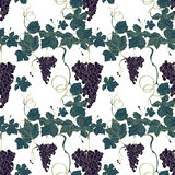 Grape pattern drawing style Royalty Free Stock Image
