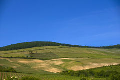 Grape plantation. On the Eged mountain Stock Photo