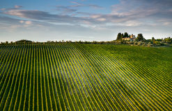 Grape plantation and fork. Royalty Free Stock Photos
