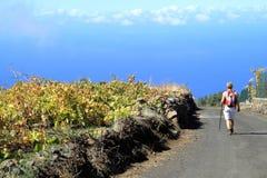 Grape plantation on La Plama Stock Photo