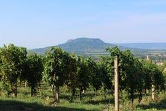 Grape plantation and mount Badacsony royalty free stock photos
