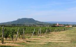 Grape plantation and mount Badacsony royalty free stock photo