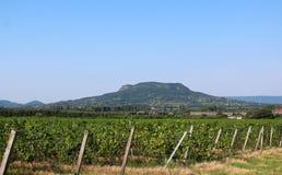 Grape plantation and mount Badacsony stock photos