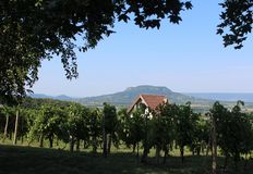 Grape plantation and mount Badacsony stock images